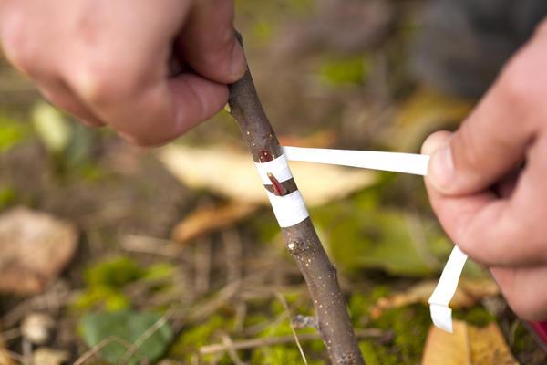 Қордың жоғары сапалы және сәтті күресуінің маңызды шарты және қорғасын - олардың ботаникалық қатынасы