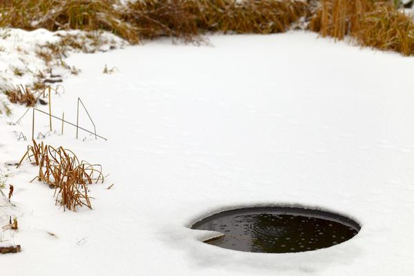 Резервуар бірінші мұзбен жабылған кезде, оның ішінде өмір қатып қалады, ал балық түбіне батырылады