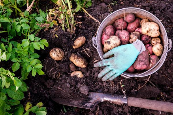 Правильный уход - большой и здоровый урожай