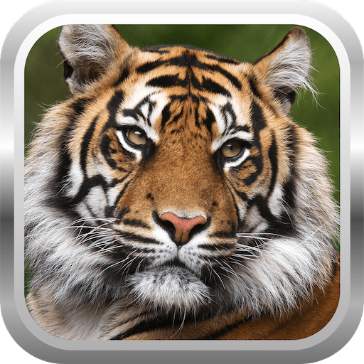 African Tiger Shooter 3D 2.0.2 icon