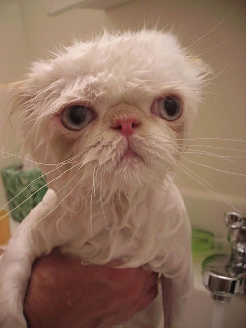 15 Angry Wet Cats