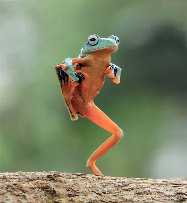 Most Photoshoped-like Real Photos of Frogs by Tanto Yensen ...