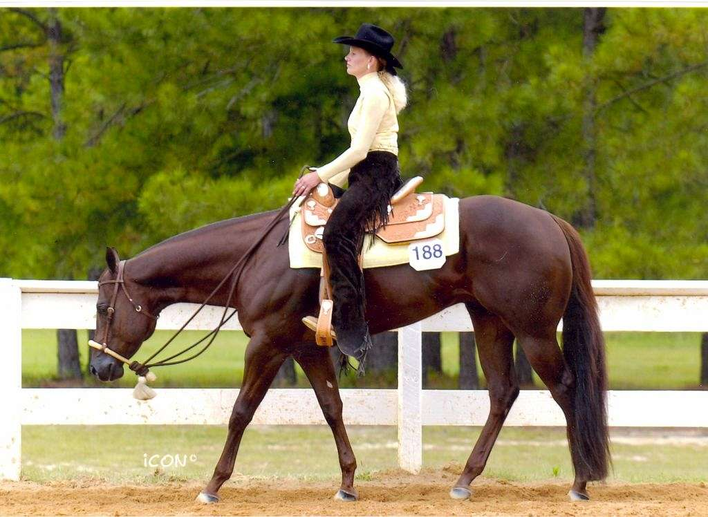 Ck Performance Horses On Equinenow