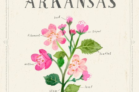 Mockingbird And Arkansas State Bird Flower Northern Apple Blossom Counted Cross Stitch Pattern Hobbs Park Conservation Area