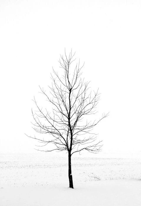 Items similar to Winter Landscape Photography, Nature ...