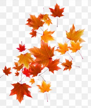fall leaves png # 5