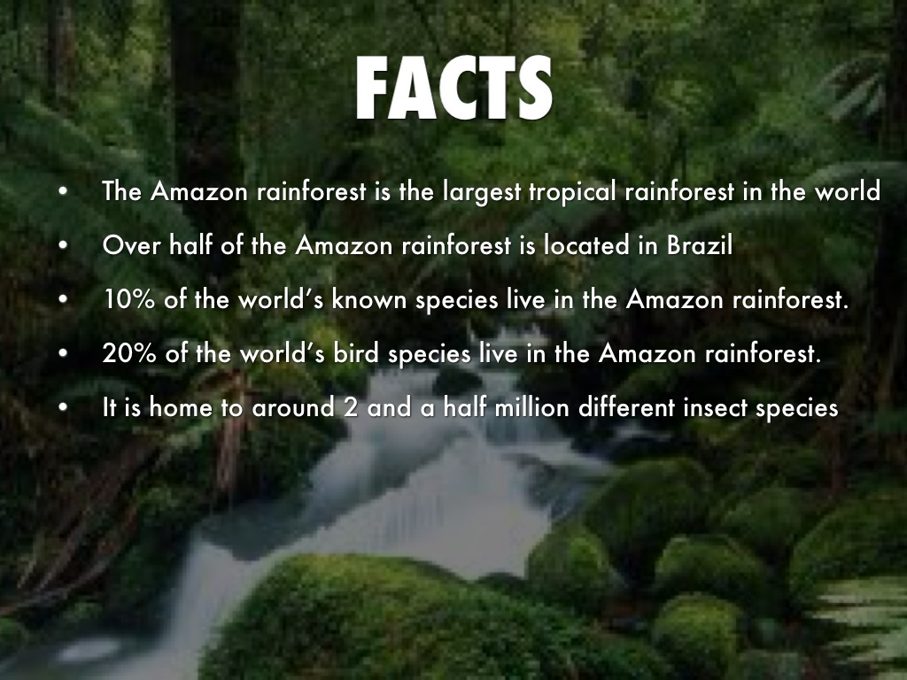 amazon rainforest facts - HD1024×768
