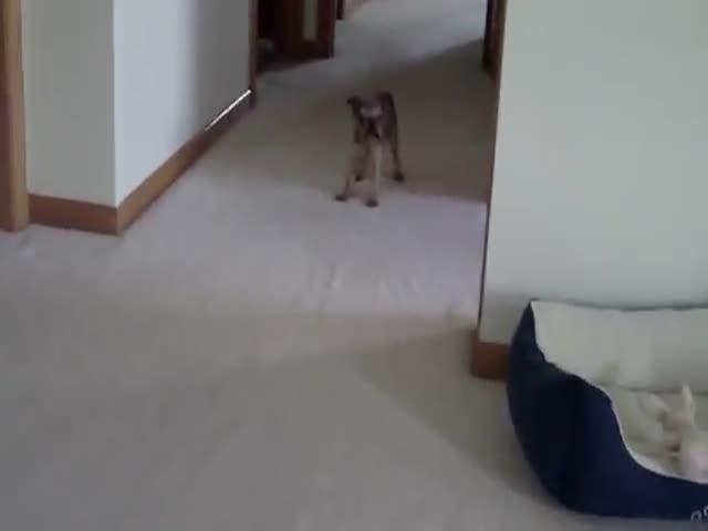 Hilarious Talking Angry Wet Dog - Izismile.com