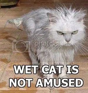 Democratic Underground - DO NOT TAUNT ANGRY WET CAT ...