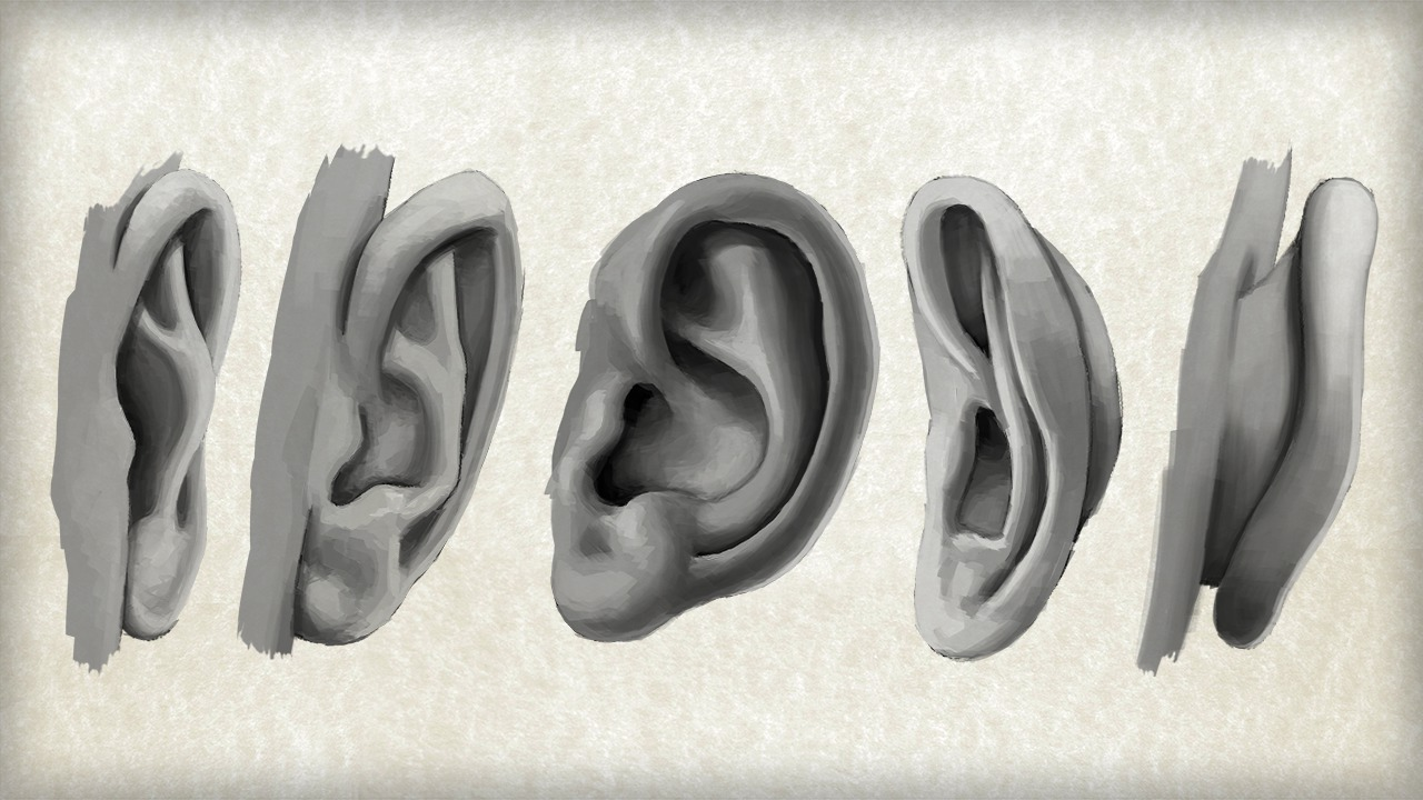 Drawing Ears Front View