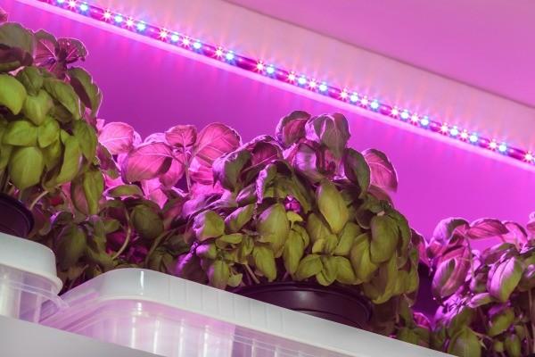 Best Led Grow Lights Indoor Plants