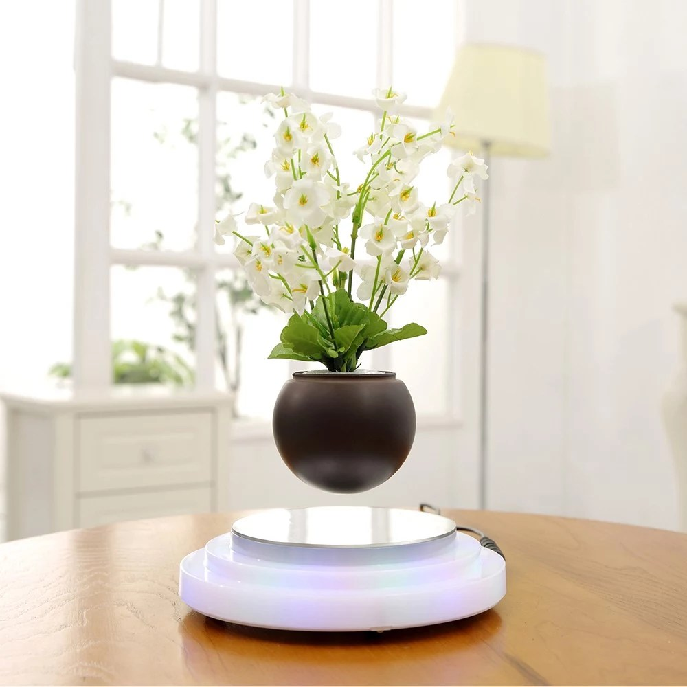 Floating Bonsai Buy Online