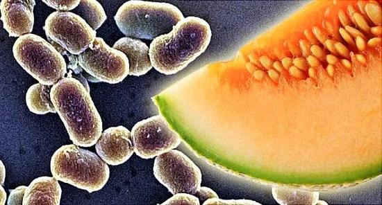 Bacteria Quiz And Virus