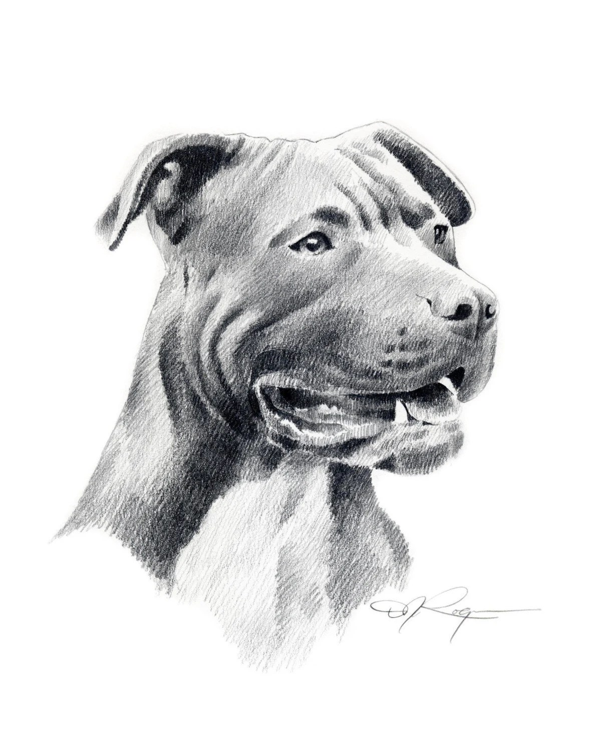 Drawings Pit Bull Dogs