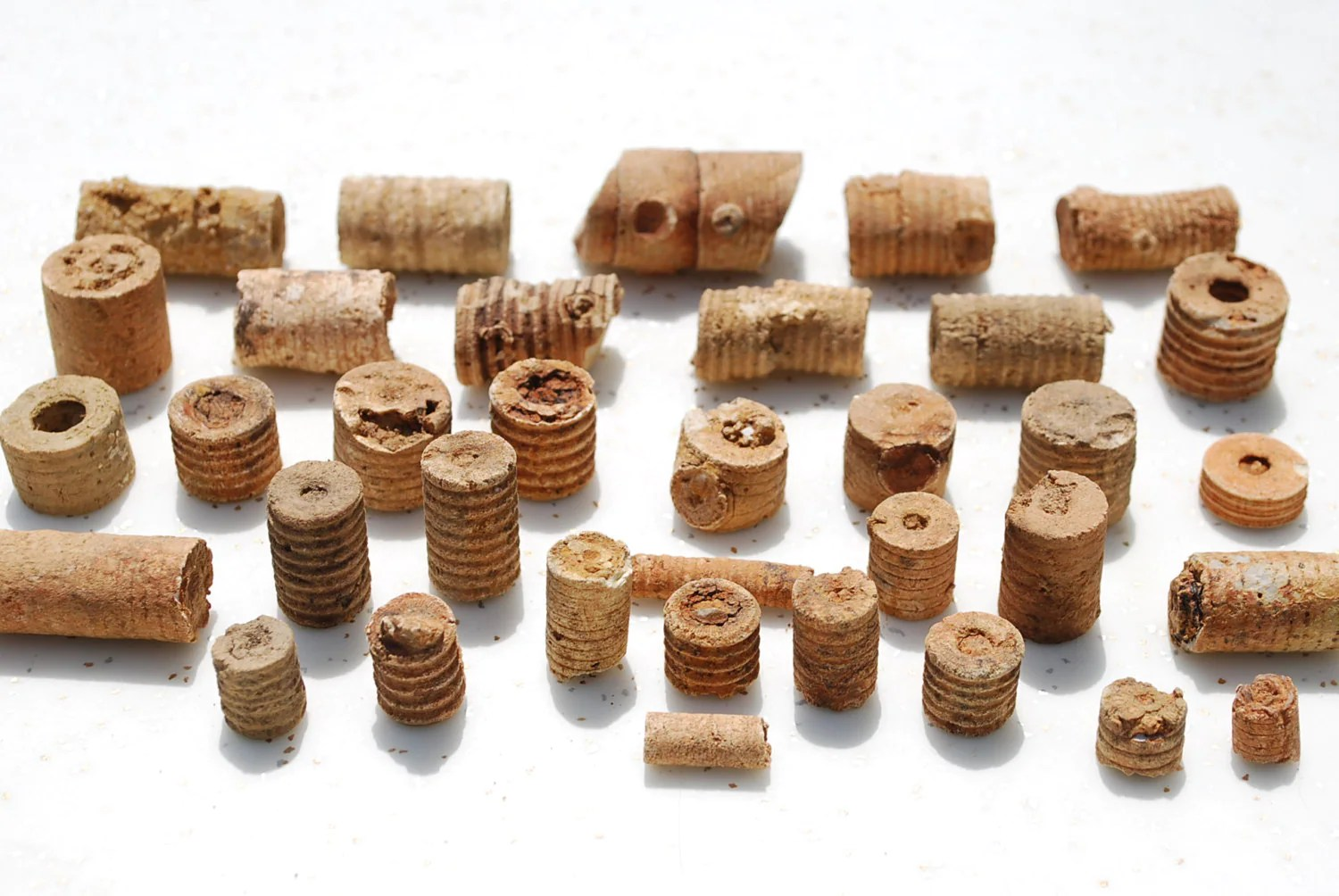 Indian Beads Crinoid Fossils 35 Pieces by AGlimpseFromthePast