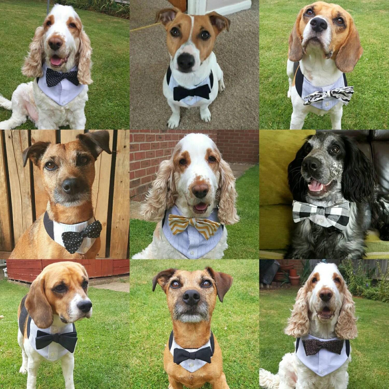 Dog Wedding Attire Uk
