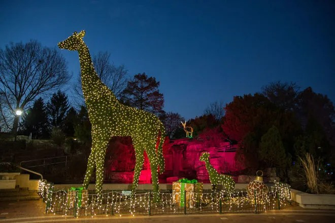 Zoo Lights Cleveland Ohio