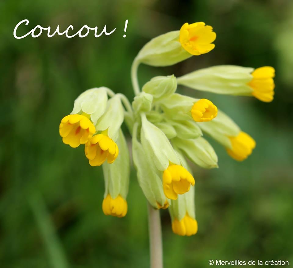 Coucou Images Photos Et Illustrations Pour Facebook