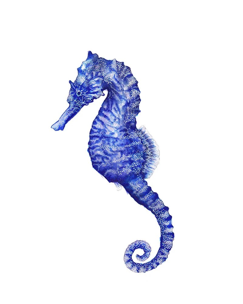 purple seahorse - 800×1000