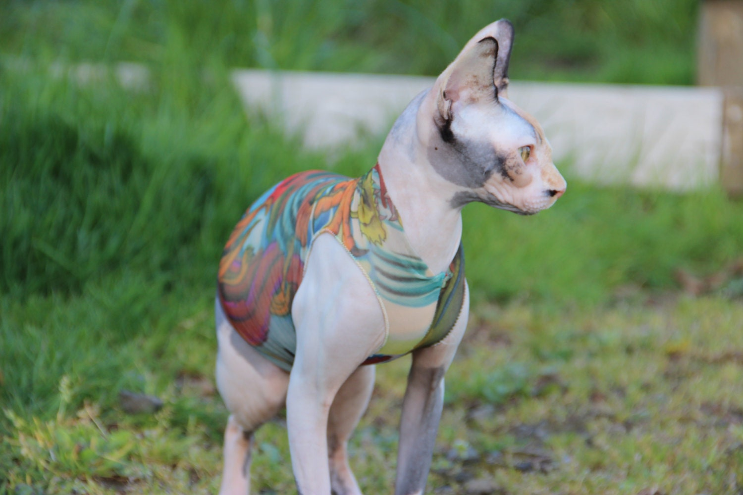 Sphynx Cat Clothes Japanese Dragon Tattcat™ Chinese