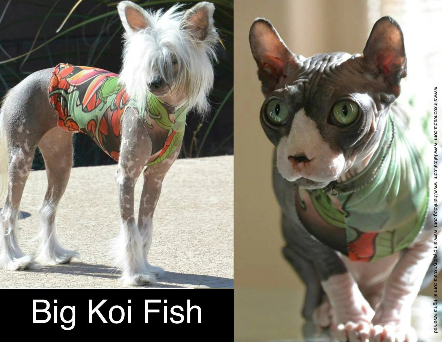 Dog Clothes Tattoo shirt for sphynx cats or Chinese Crested
