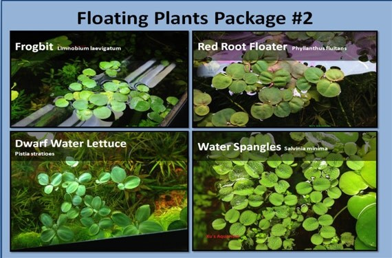 Rooted Floating Plants