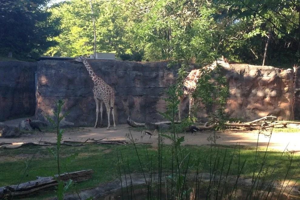 video portland zoo - 990×660
