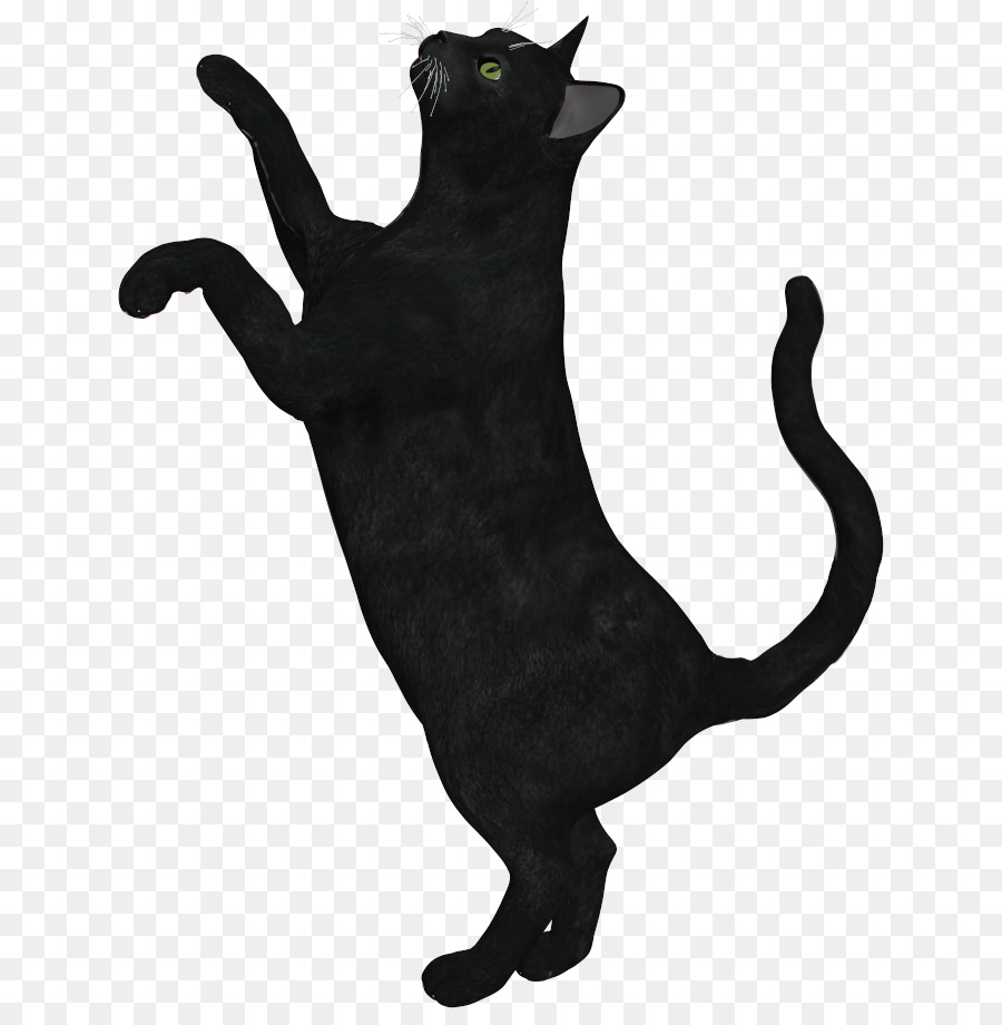 cat clipart transparent background - 728×906