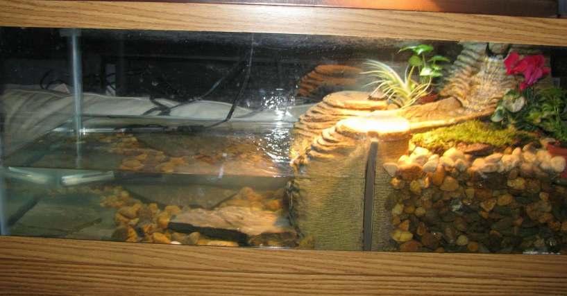 Best Turtle Filter Aquatic Turtles
