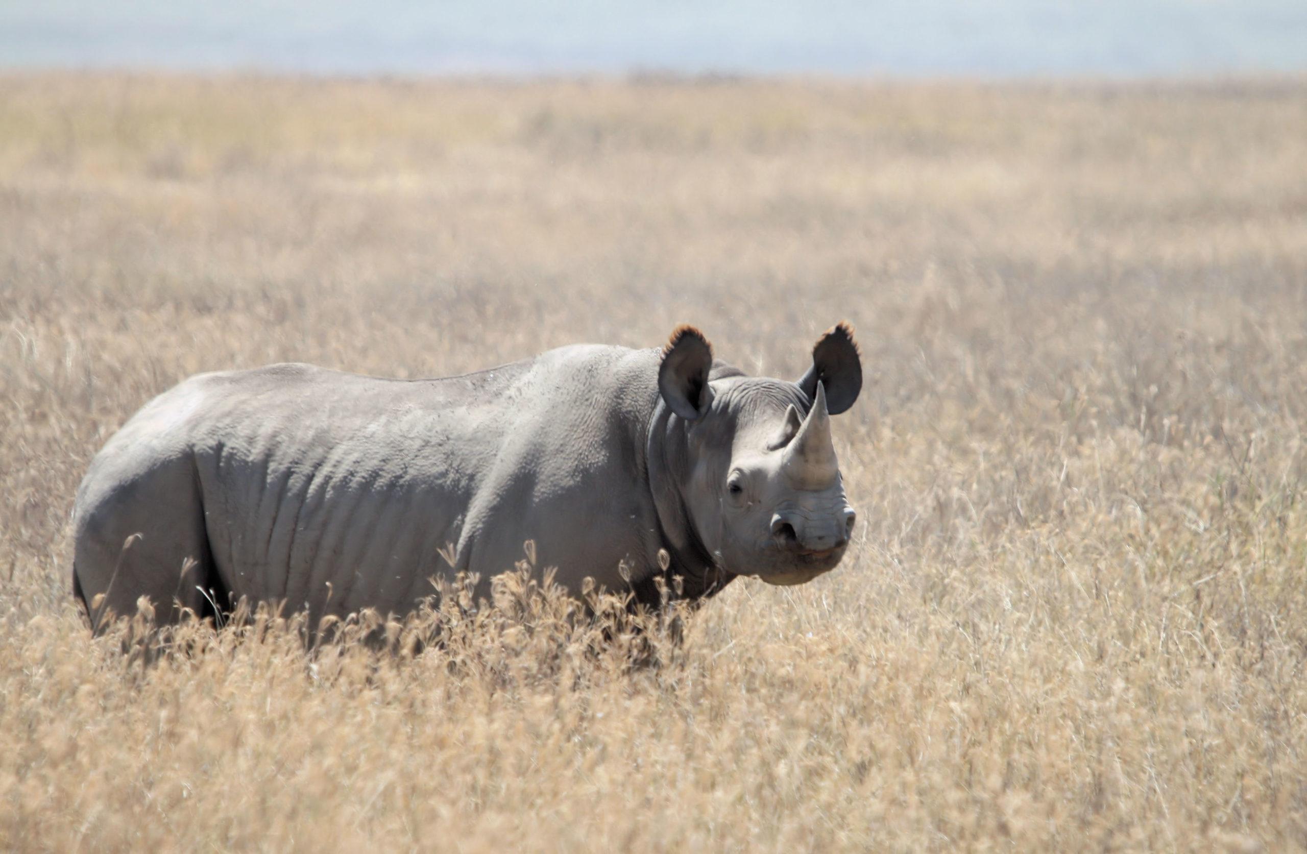 Malawi court sentences Chinese wildlife trafficking kingpin to 14 years in jail