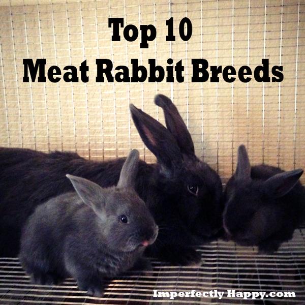 Best Bread Meat Rabbits