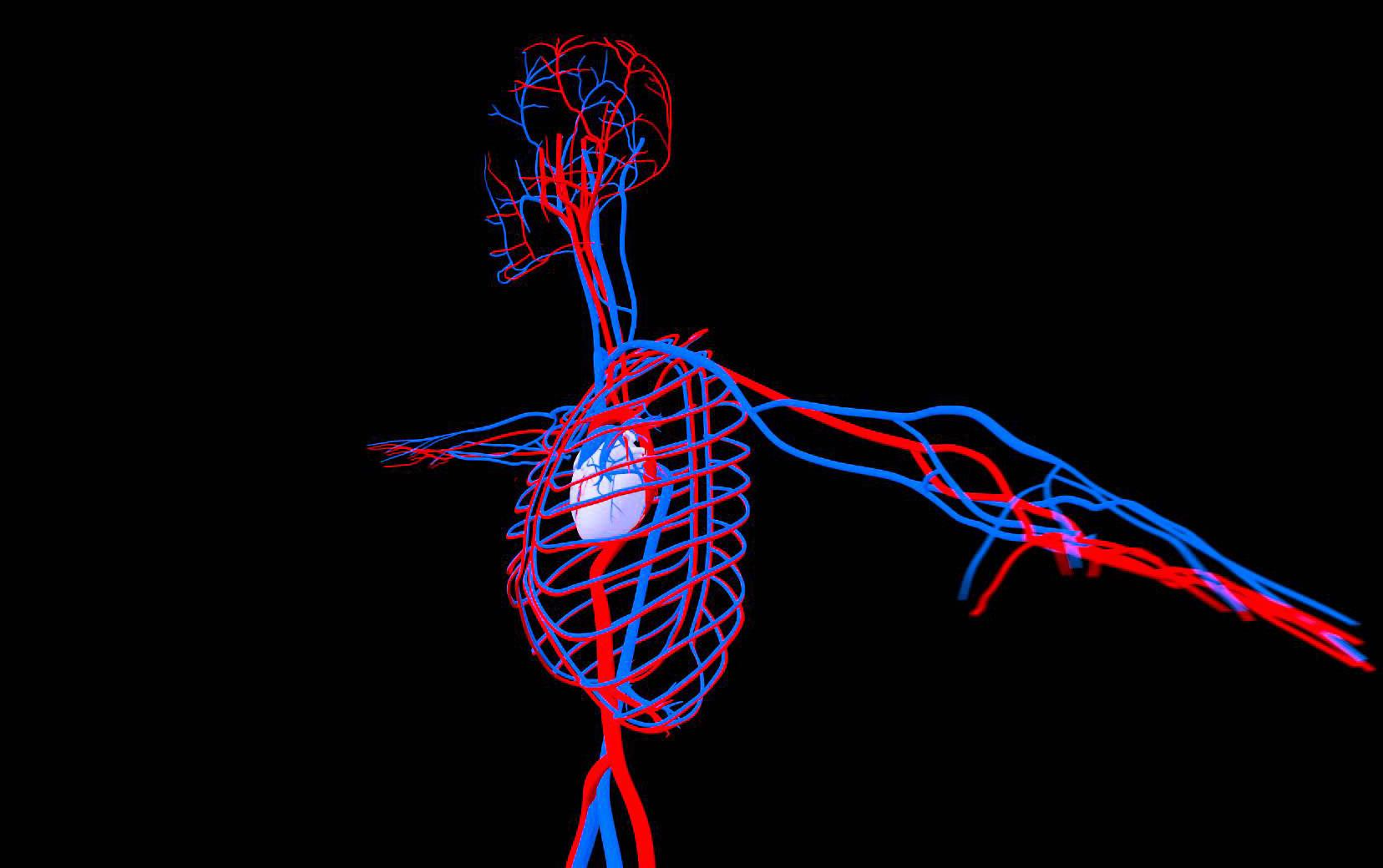 circulatory system images - 1280×720