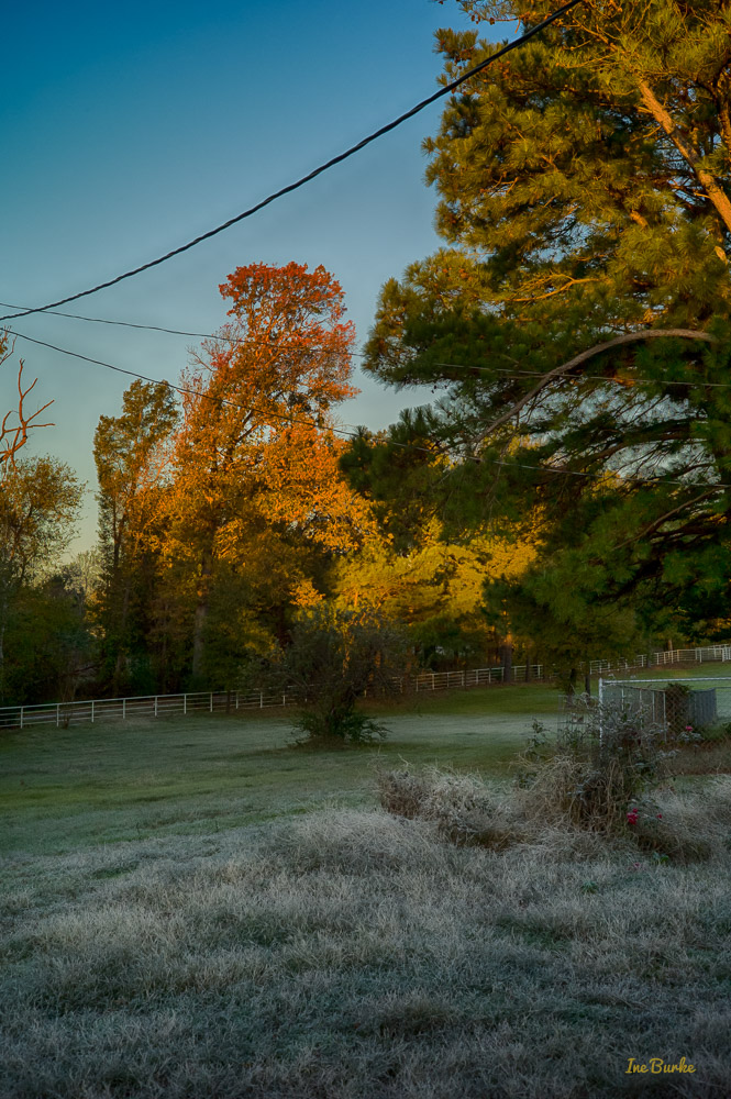 First Frost In East Texas Inegaleri
