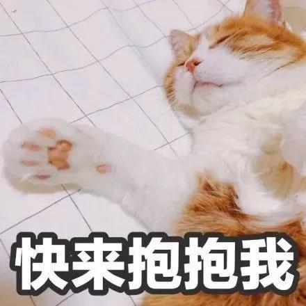 新闻哥吐槽:本是同根生,猫何苦为难猫!