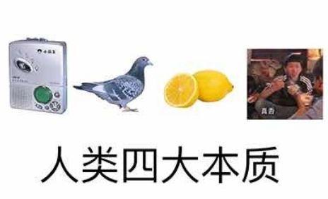 新闻哥吐槽:真香、鸽子、柠檬精、复读机……谁都逃不过人类四大本质