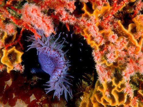 Help How Does Clownfish Sea Anemone