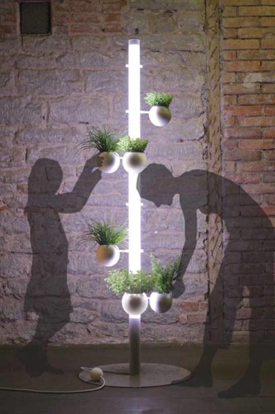 Good Indoor House Plants
