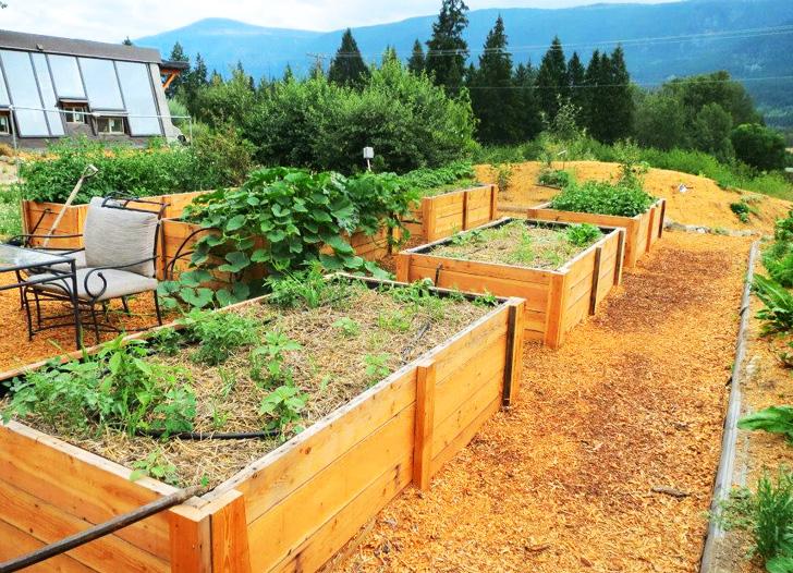 Bed Raised Garden