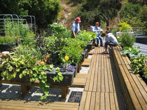 Earthbox Vegetable Garden