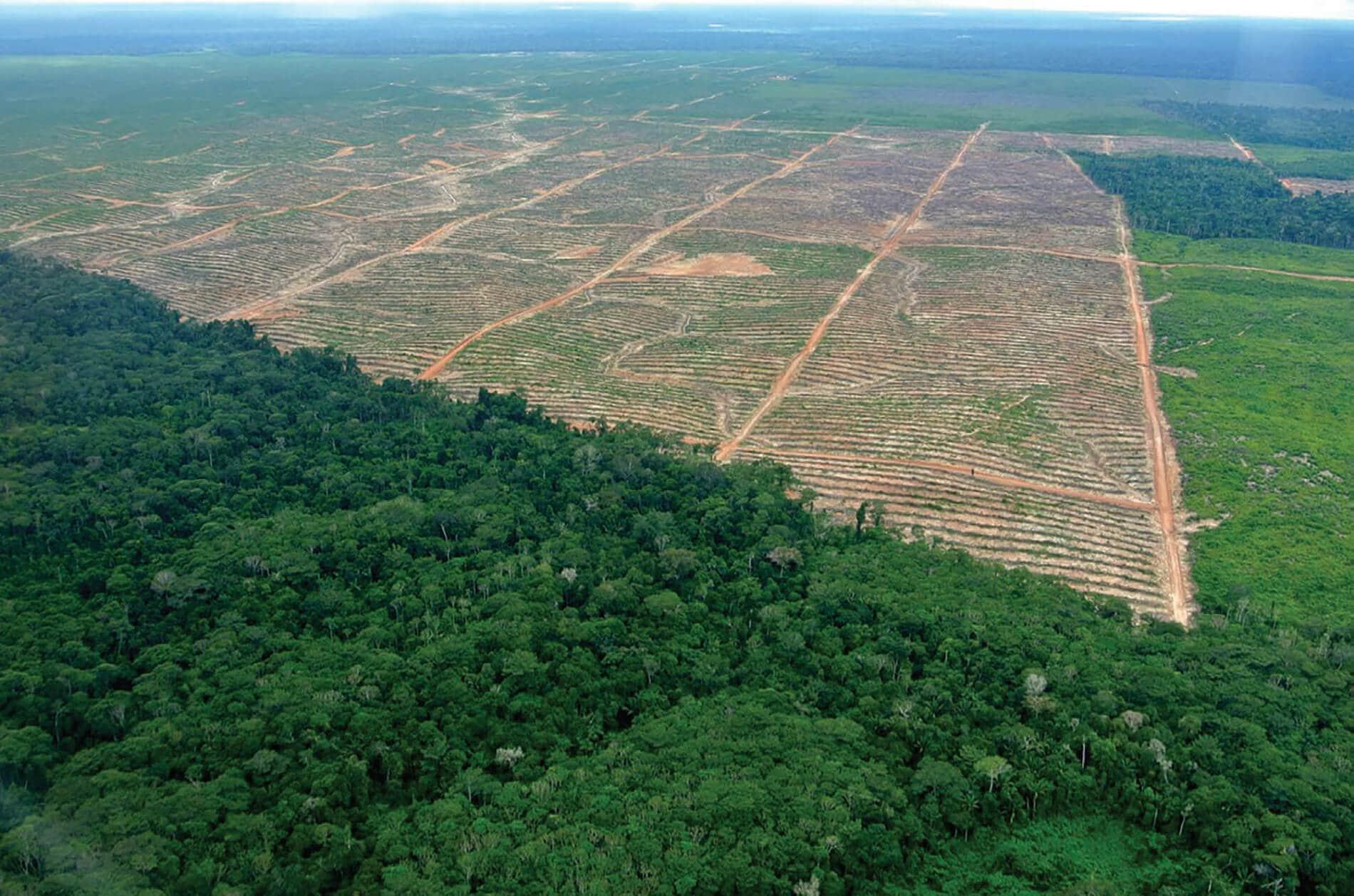amazon rainforest deforestation - HD1900×1258