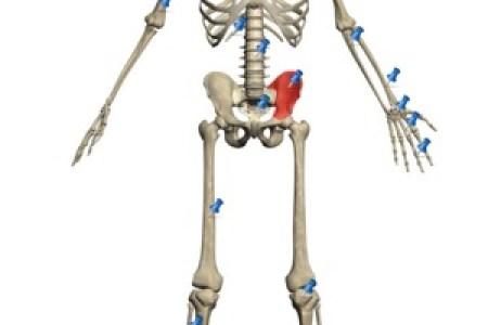 Human Body Painting Human Anatomy Human Ken Doll Human Skeleton
