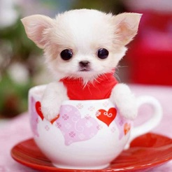 Cute Puppy Wallpapers   Little Dog s Paws Images on the App Store Cute Puppy Wallpapers   Little Dog s Paws Images 4