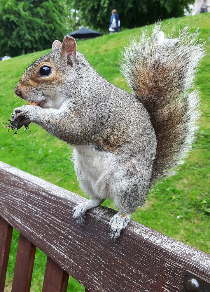Squirrel Free Jigsaw Puzzles Online