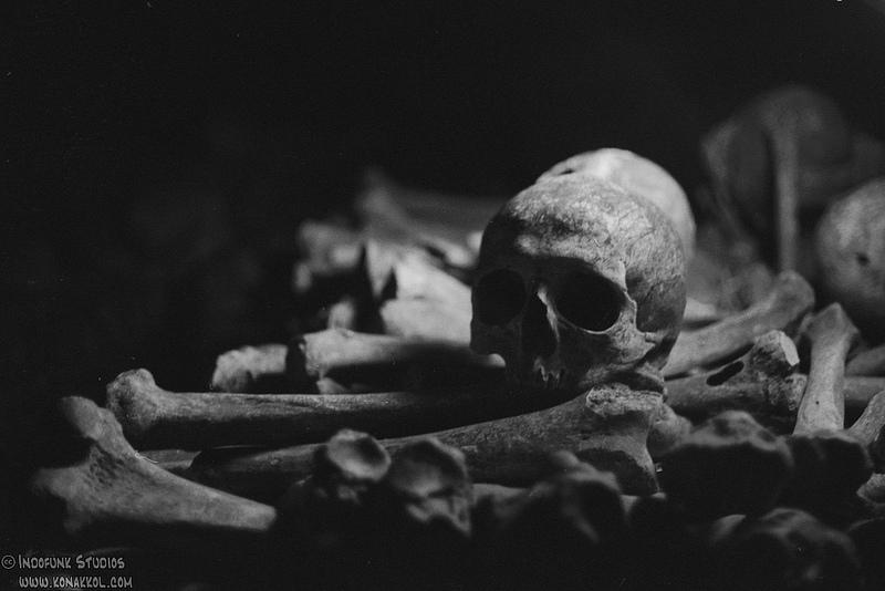 pile of bones - 1111×624