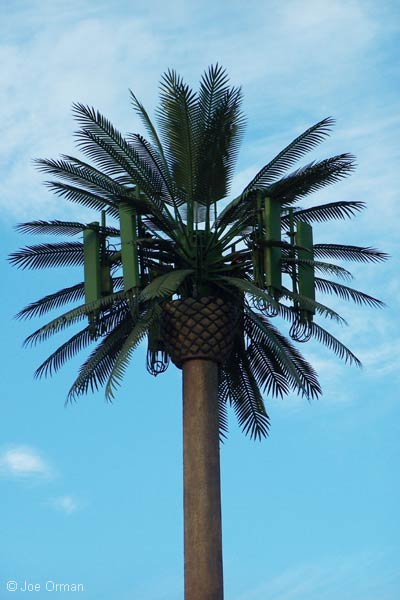 Joe Orman S Photo Pages Palm Tree Cell Tower Chandler
