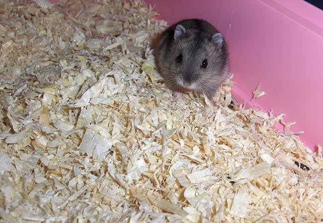Best Safe Type The Best Hamster Bedding Buying Guide 2019 With Pictures