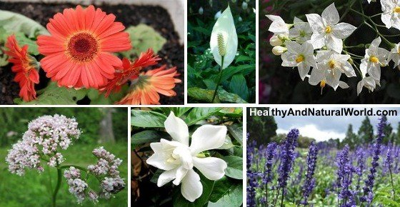 Best The 10 Best Plants To Have In Your Bedroom To Help You With Pictures