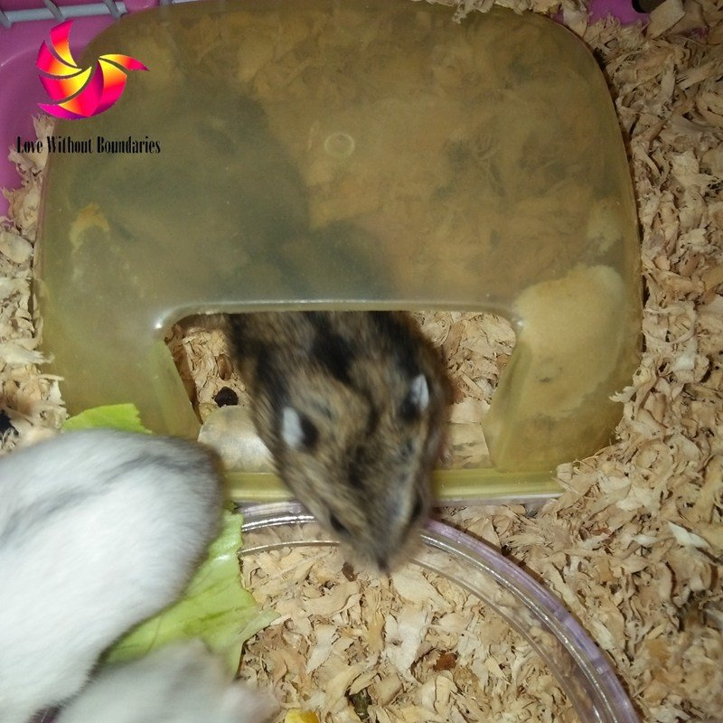 Best Hamster Bedroom Sleeping Room Pet Nest King Size Bed With Pictures