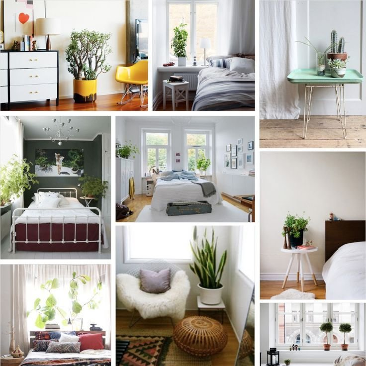 Best 197 Best Bedroom Plants Images On Pinterest Bedroom With Pictures