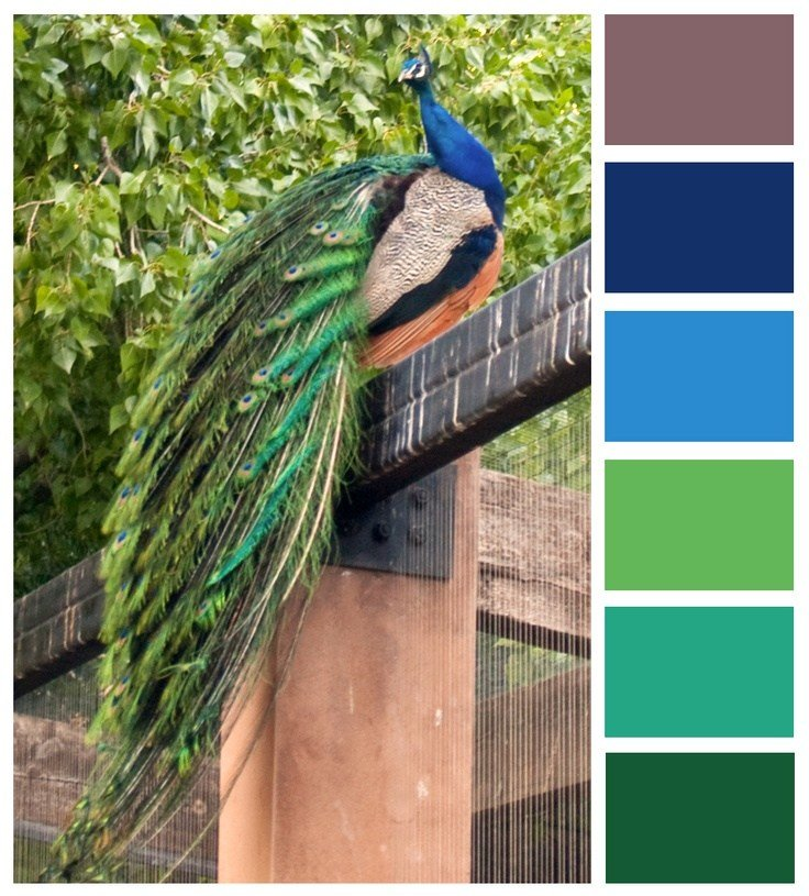 Best 25 Peacock Color Scheme Ideas On Pinterest Peacock Colors Peacock Bedroom And Jewel With Pictures